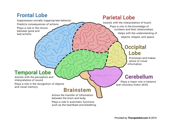 Human brain parts and functions diagram