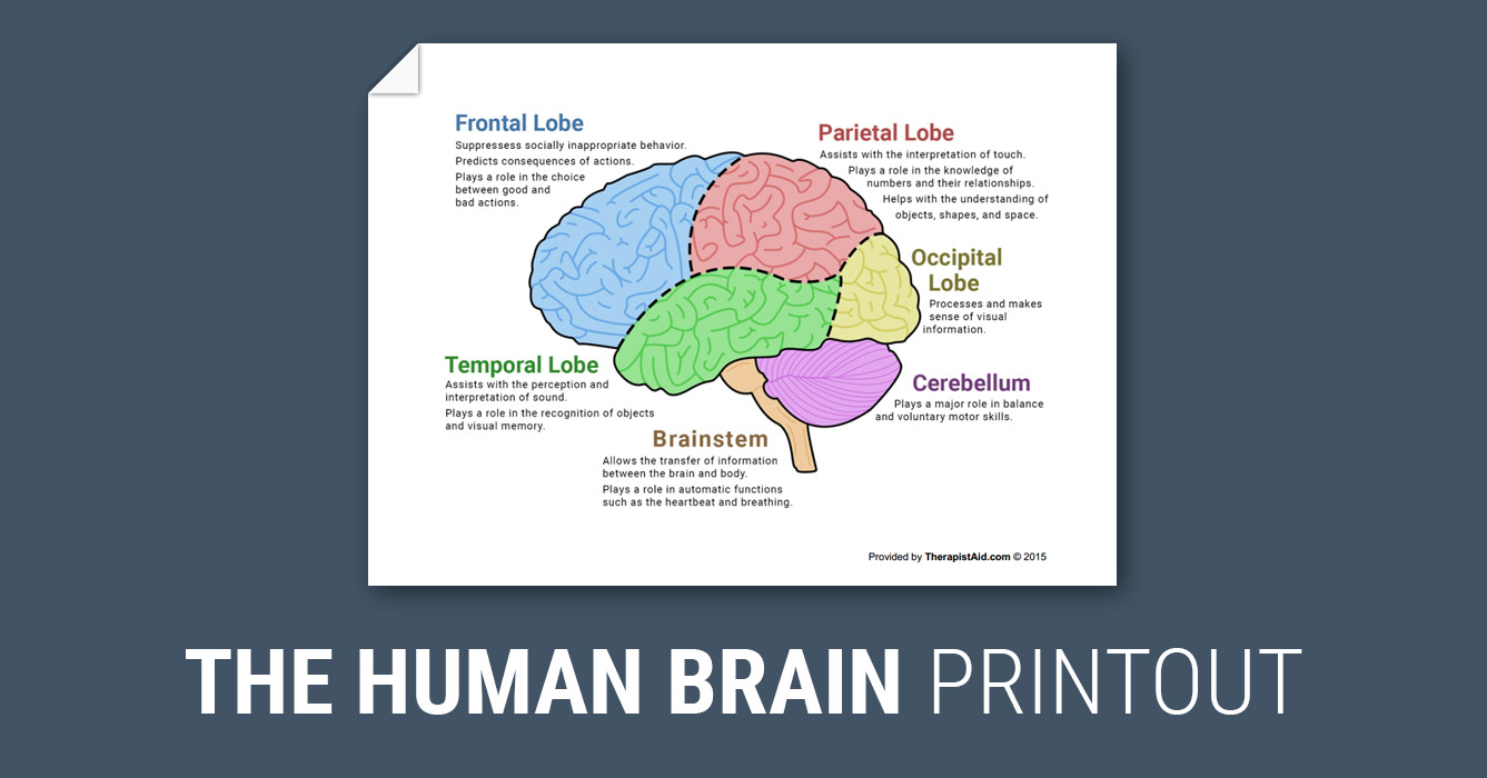 The human brain diagram worksheet therapist aid ccuart Choice Image